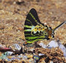 travels with the butterfly the hindu