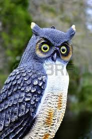 owl lawn ornament stock photo picture and royalty free image