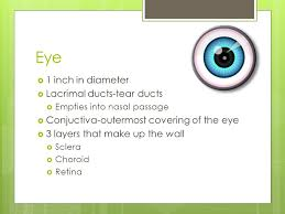 Eye Ducts Anatomy Ch 23 Head And Face Eye Objectives Describe The Anatomy Of