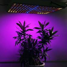 where to buy indoor grow lights led grow lights home depot indoor led grow lights home depot canada