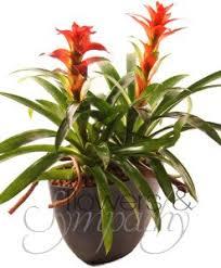 funeral plants funeral flowers plants pot miami flowersandsympathy