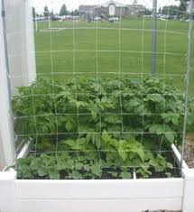 Cucumber Spacing On Trellis Growing Vertical U2013how To Support Your Plants U2013 My Square Foot Garden