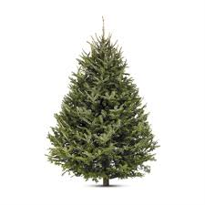 balsam fir christmas tree 8 9 ft fresh balsam fir christmas tree lowe s canada