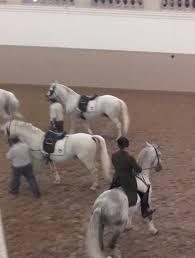 spanische k che 271 best spanische hofreitschule images on equestrian