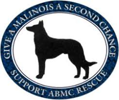 belgian sheepdog alberta rescue bsdcc