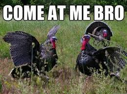 Turkey Memes - turkey memes 28 images funny happy thanksgiving memes image