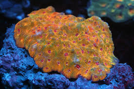 Exotic Colors by Exotic Sea Life U2013 Collectors Distributors And Importers Of