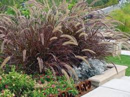 beautify your garden with beautiful ornamental grasses home