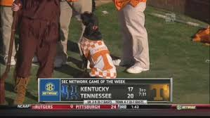 bluetick coonhound in tennessee tennessee mascot smokey gets loose goes after kentucky u0027s kicker