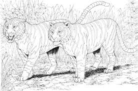 free coloring pages wild cats high quality coloring pages