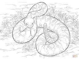 western diamondback rattlesnake coloring page free printable