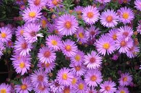 10 Perennials That Thrive In by Top 10 Plants For Clay Soil Clay Soil Plants Birds U0026 Blooms