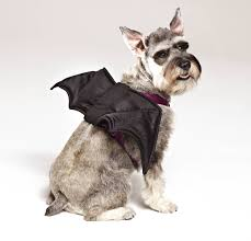 small dog witch costume calling all fuzzy and scary cute pets to petsmart this halloween