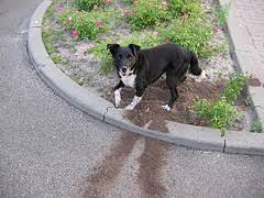 how to stop a dog from digging dog training guide