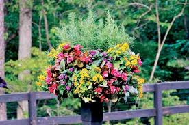 Ideas For Container Gardens Easy Container Garden Ideas Backyard Projects Birds And Blooms