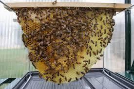 Backyard Beehive Backyard Bee Hive Blog April 2009