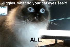 Do All The Meme - jingles what do you cat eyes see imgur