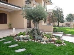 albero giardino abbellire un albero di ulivo ecco 16 splendidi esempi per