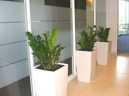 plants for office decora o com plantas naturais floor plants for office lifelike