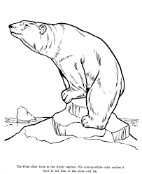 animal drawings coloring pages polar bear animal identification