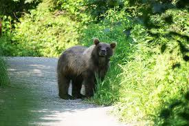 Alaska wildlife tours images Alaska wildlife tour alaska outdoors jpg
