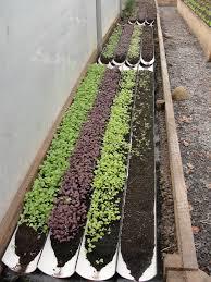 Herb Garden Layout by Herb Garden Layout Raised Bed Inspirational Vegetable Garden