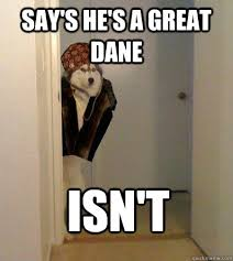 Great Dane Meme - say s he s a great dane isn t scumbag dog quickmeme