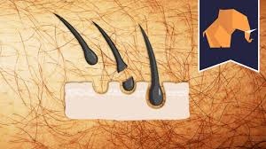 how to pluck your pubic hair does hair grow back thicker if you shave or pluck youtube
