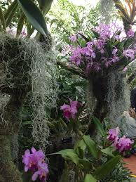 Botanical Garden Orchid Show Missouri Botanical Garden Orchid Show The Arch City Gardener