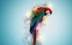 bird wallpaper beautiful parrot bird wallpaper for desktop pc mobile in high