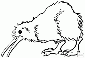 kiwi great spotted kiwi birds coloring pages colorpages7 com
