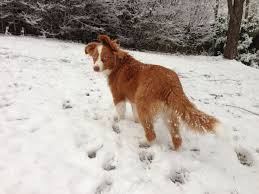5280 australian shepherd 47 best dog astrology images on pinterest astrology horoscopes