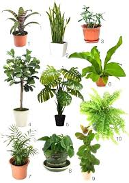 indoor plants that need no light 6 house plants that clean your air plants air filtering plants