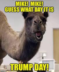Camel Meme - mike imgflip