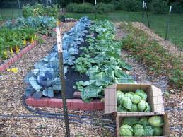 winter gardening tips for veggies and fruit central mo breaking news