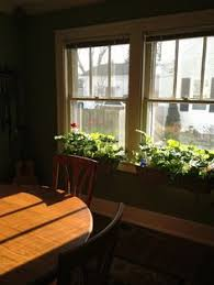 indoor plants for a south facing window houseplants u0026 decorating