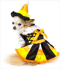 Candy Corn Halloween Costume Candy Corn Witch Dog Costume U2013