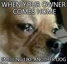 Dog Owner Meme - dog problems other dogs imgflip