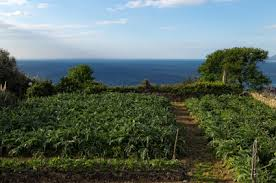 vegetable gardening in the pacific northwest off the grid news