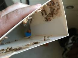 those little nasty pantry moths and what you can do about them