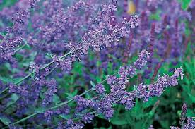 purple and blue flowers top 10 purple plants for your flower garden birds and blooms