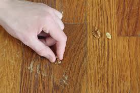 we can anything the walnut wood repair trick