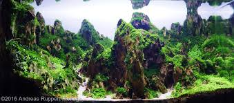 Aga Aquascape 2016 Aga Aquascaping Contest 12