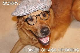 Hipster Dog Meme - hipster dog meme imgur