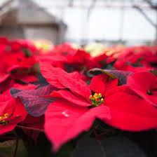 Indoor Vegetable Container Gardening - 3258 best gardening trends images on pinterest flower gardening