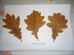 the best way to dry leaves for craft projects fall craft ideas