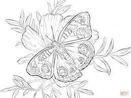 flower bucket drawing butterfly and a bucket of flower coloring