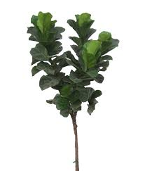 shop for houseplants online now garden goods direct
