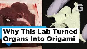 turning pig livers into paper cranes for science youtube