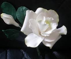 gumpaste gardenia bouquet gumpaste gardenia bud and leave u2026 flickr